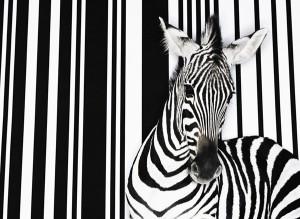 Big Inja Barcode Zebra