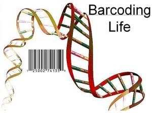 DNA Barcode