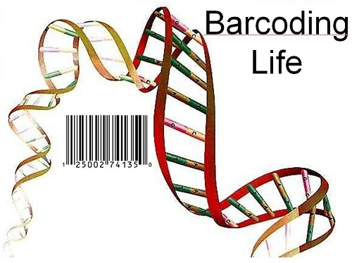 DNA Barcode