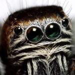 black-spider-macro_26195_990x742
