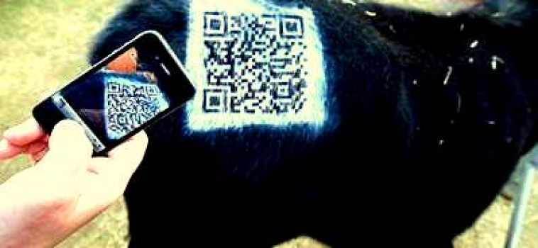 Mad Cow QR code campaigns